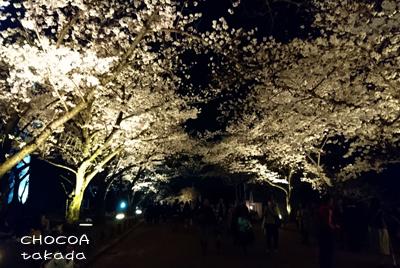 桜 さくらまつり 千里丘近辺 万博公園 太陽の塔
